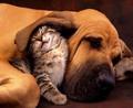 Cei Mai Buni Prieteni