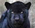 Frumusetea Negrului