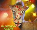 Un Weekend Placut